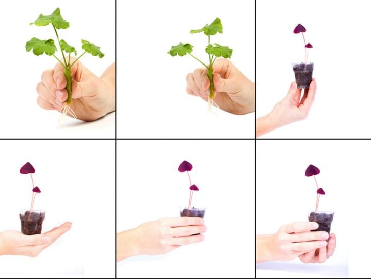 Da una pianta ne fai due