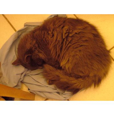 Gatti matti photogallery2