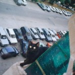 Gatti matti photogallery13