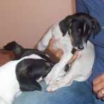Io e... il mio cucciolo photogallery10