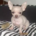 Io e... il mio cucciolo photogallery13