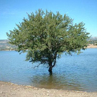 Il mio albero photogallery