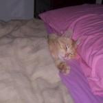 Aprile dolce dormire photogallery4
