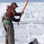 UE: stop alla mattanza delle foche