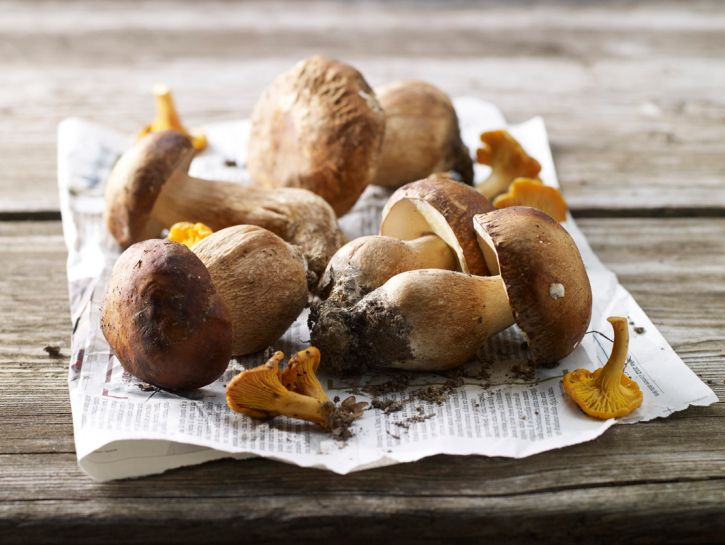 Funghi: guida alla scelta