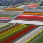 Che meraviglia i tulipani!