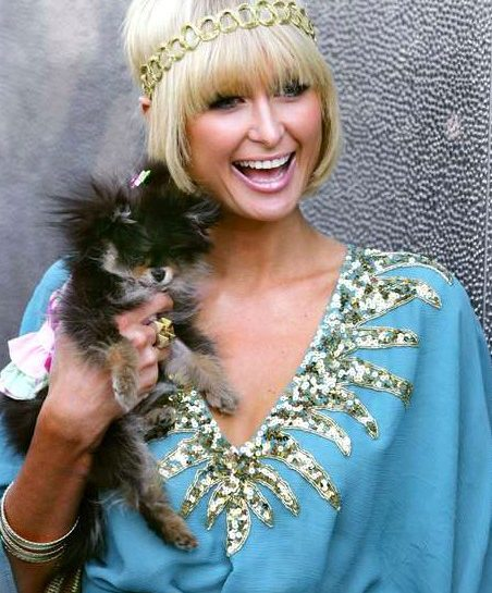 Toy dog: Paris Hilton