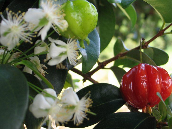 cover ciliegia cayenna