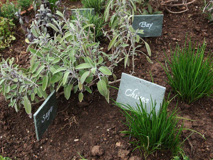 Le erbe aromatiche: cosa conviene coltivare