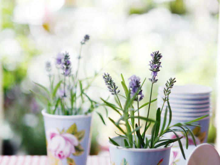 Decorare la tavola con i fiori: profumo di lavanda