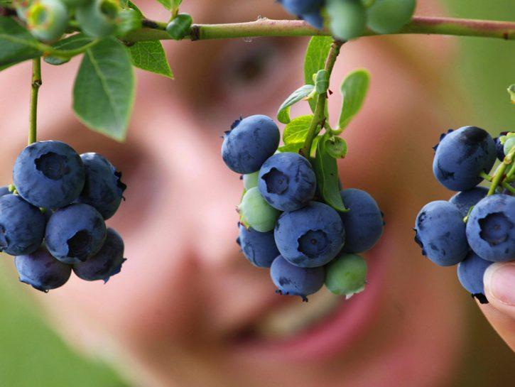 Coltiva i frutti di bosco