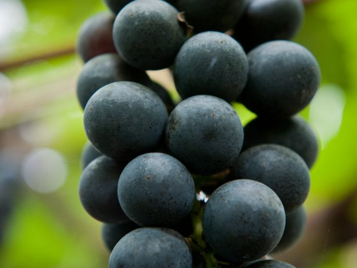 L'uva Lavallée per i dessert