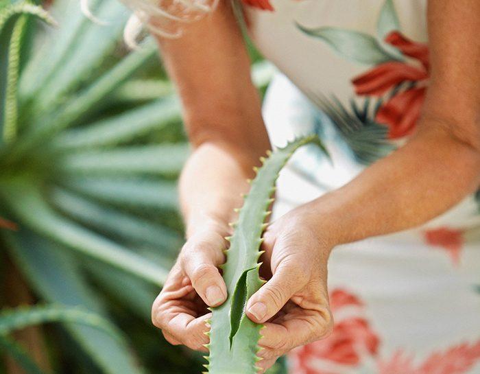Aloe potente come farmaco