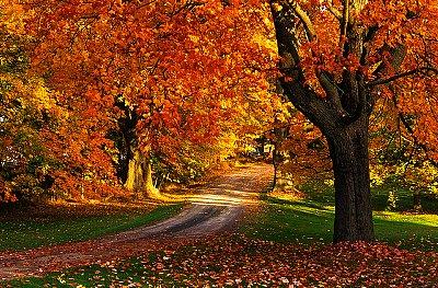 Maple Tree with Fall Foliage, Port William, Nova Scotia, Canada