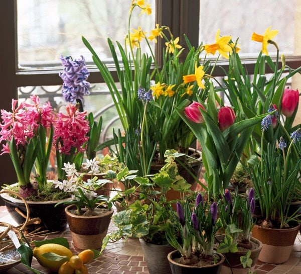 Giardinaggio come piantare i bulbi
