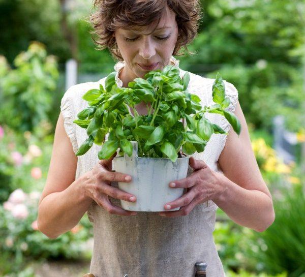 Bella stagione: cosa fare in giardino