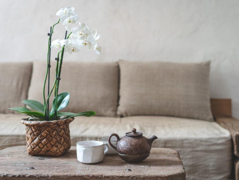 piante facili da tenere in casa