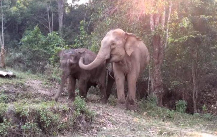 elefante mamma