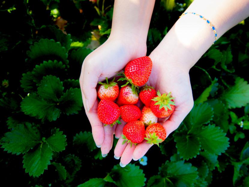 frutta primaverile