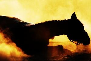 cavallo che cade