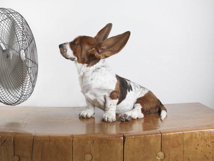 Colpo di calore nel cane