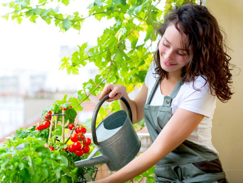 coltivare i pomodori sul terrazzo