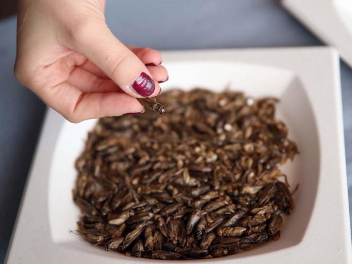 insetti 1