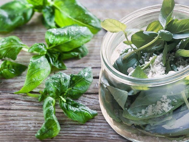 Se ami il profumo intenso e aromatico del basilico, dai mille usi in cucina, questo è il momento di