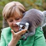 Merkel lemuro