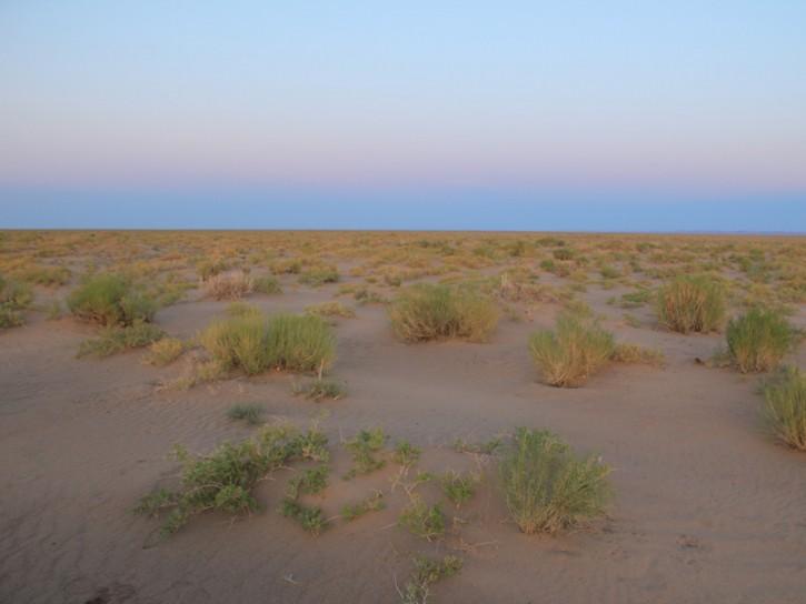 Sarah Marquis deserto