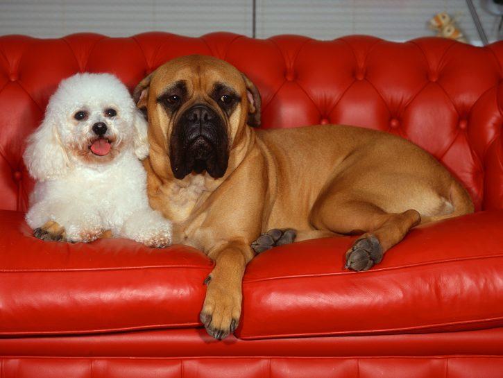 Se cerchi un compagno socievole: scegli un cane