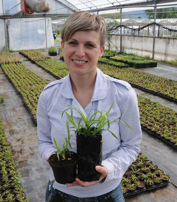 La pianta che trattiene il terreno ed evita le frane