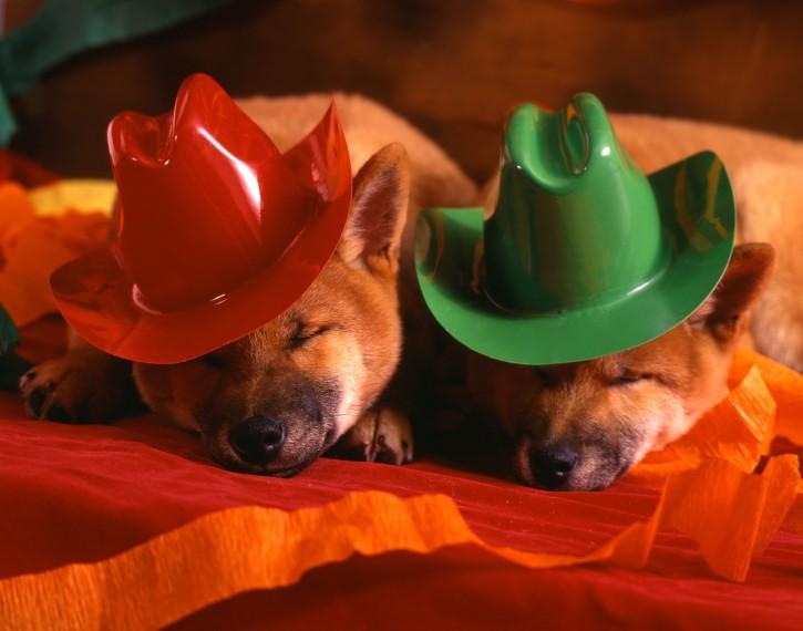 Cani festa Capodanno