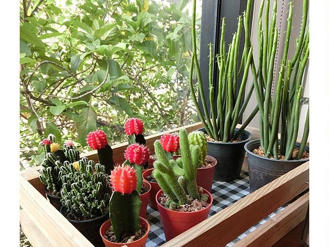 Piante grasse da interno   Arredare con le piante grasse ...