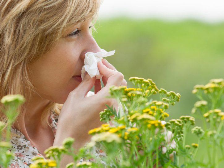 Allergia all'ambrosia. cause, sintomi, diffusione, cure