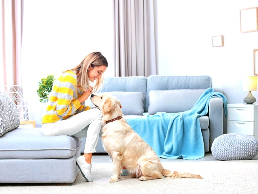 cani in casa: regole