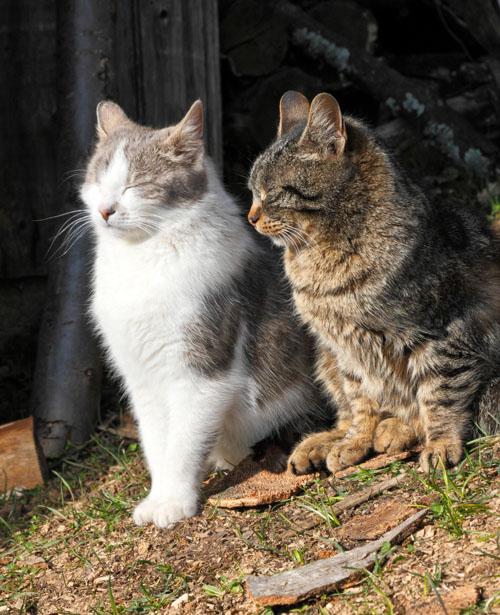Gatti accecati dal sole