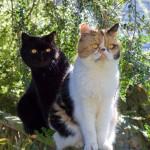 Gatti dagli occhi gialli