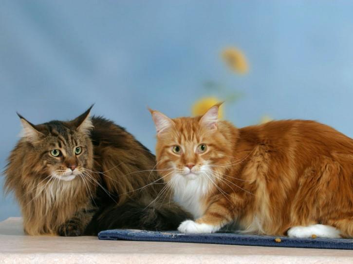 Gatti in posa