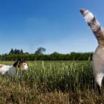 Gatti nel prato