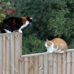 Gatti sulla staccionata
