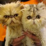 Gattini gemelli