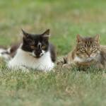 Gattini nel prato