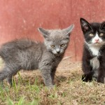 Gattini spauriti