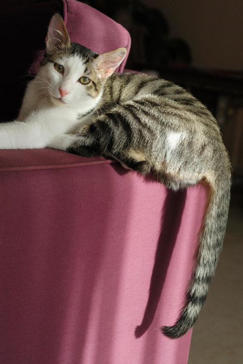Gatto sulla poltrona