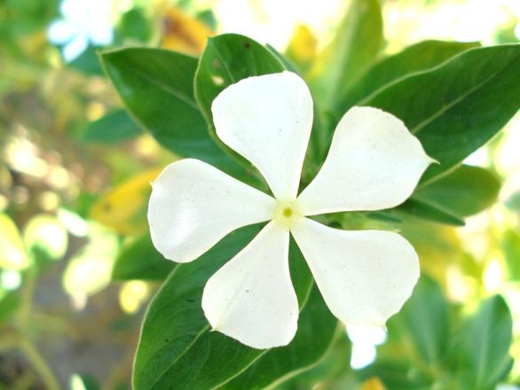 flower-2-1387975
