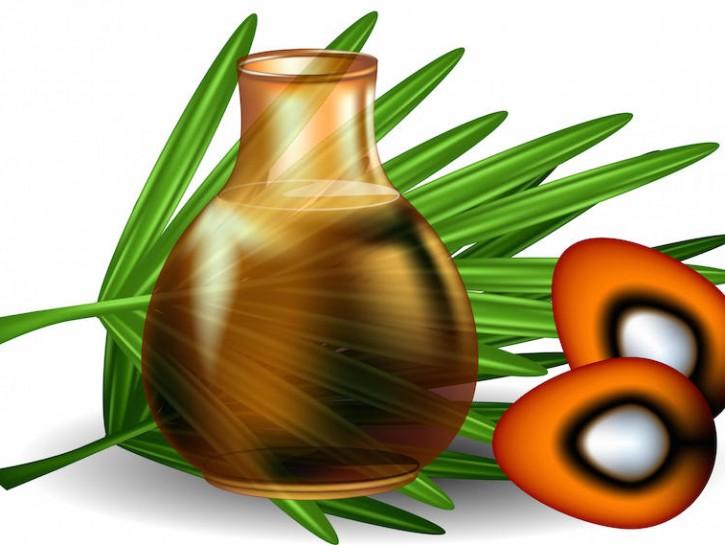 olio di palma cos'è