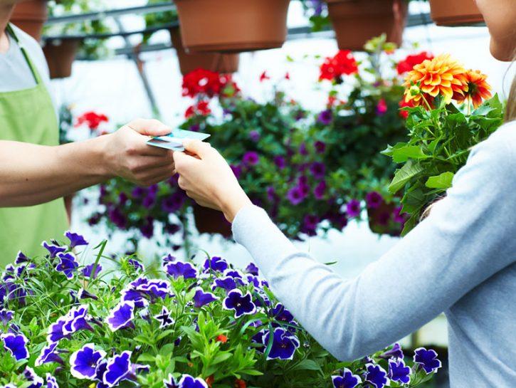 piante da comprare in aprile