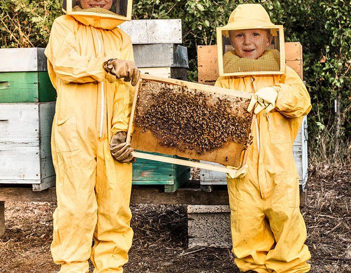 Una giornata con le api