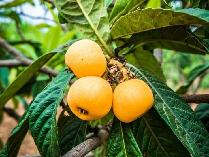 Frutta e verdura di stagione di aprile e maggio - Donna ...